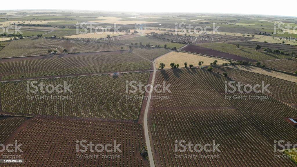 Viñedos, campo zbiór zdjęć royalty-free