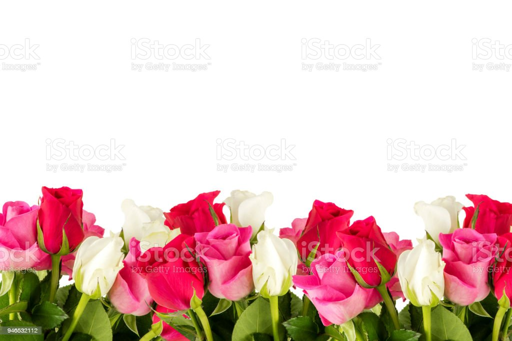 Estacionamento de rosas - foto de acervo