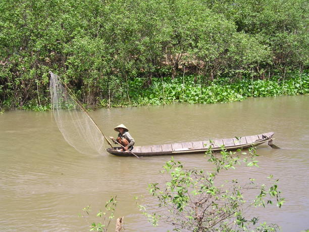 vietnam river fisherman - mcdermp stock photos and pictures
