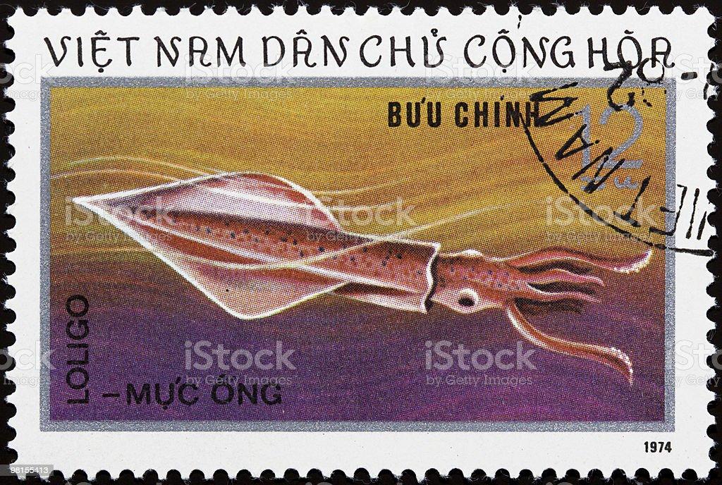 Vietnam stamp with Loligo royalty-free stock photo