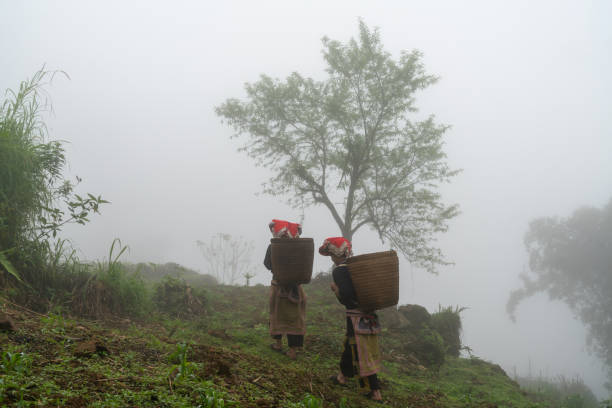 Vietnamese ethnic minority Red Dao women in traditional dress and basket on back with a tree in misty forest in Lao Cai, Vietnam stock photo