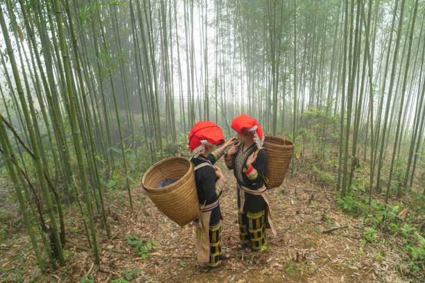 Vietnamese ethnic minority Red Dao women in traditional dress and basket on back in misty bamboo forest in Lao Cai, Vietnam stock photo