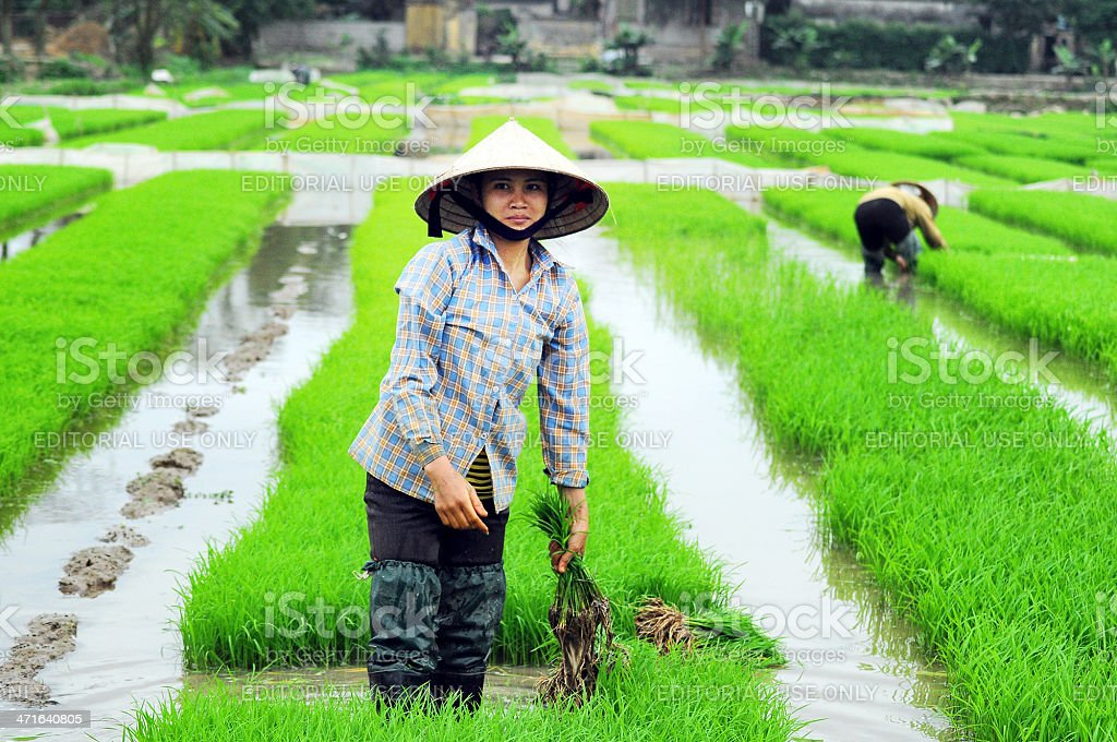 Vietnamese farmer royalty-free stock photo