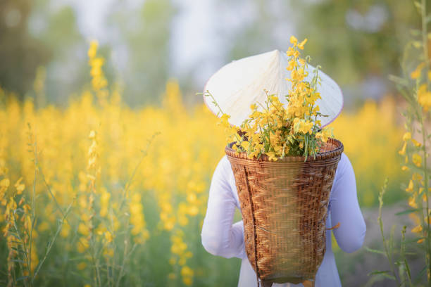 vietnamese girl with yellow flowers - ao dai stock photos and pictures