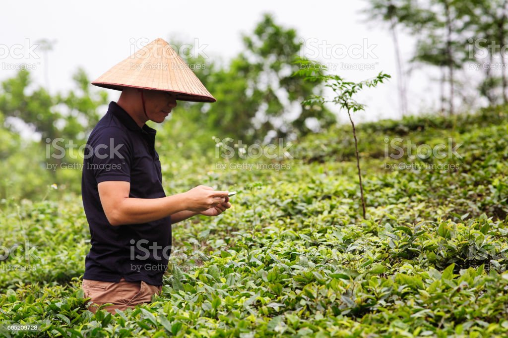 Vietnamese quality inspector taking pictures of plants with mobile phone stock photo