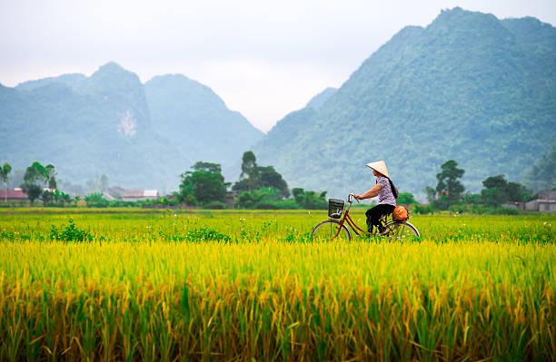 vietnamese woman and her ride in a valley - vietnam stockfoto's en -beelden