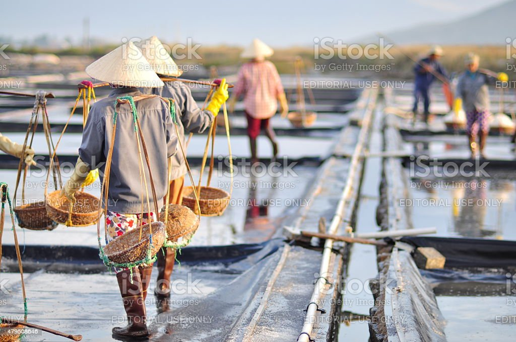 Vietnamese women are burdening hard to collect salt stock photo
