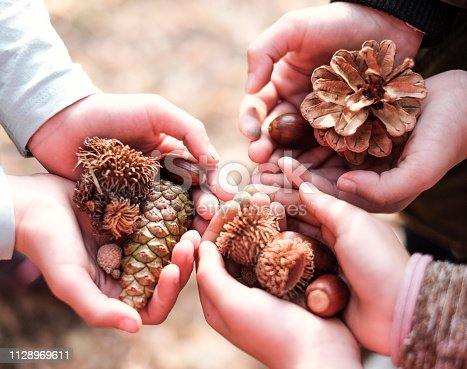 High angle view human hands full of forest fruits in nature