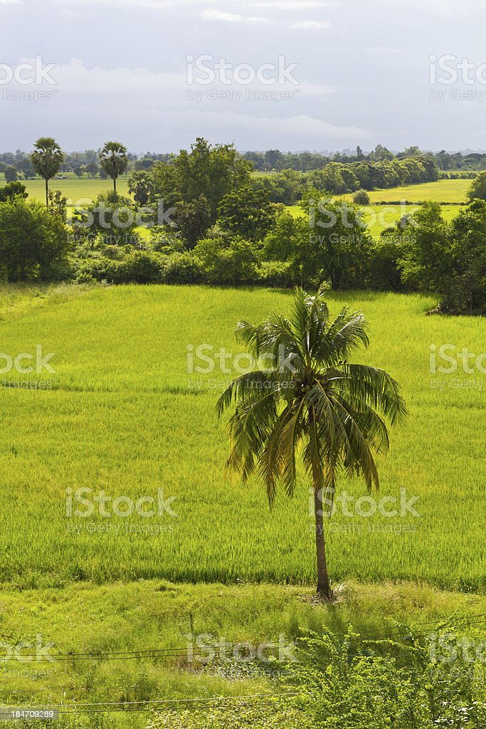 View above lone coconut tree royalty-free stock photo