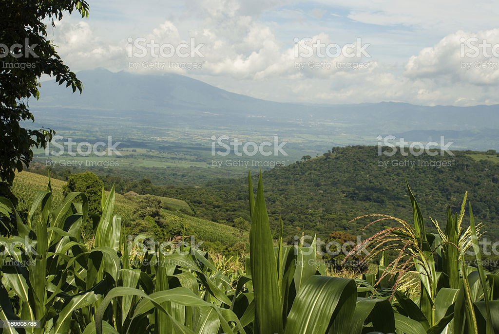 View across cornfields to Volcano near San Salvador stock photo