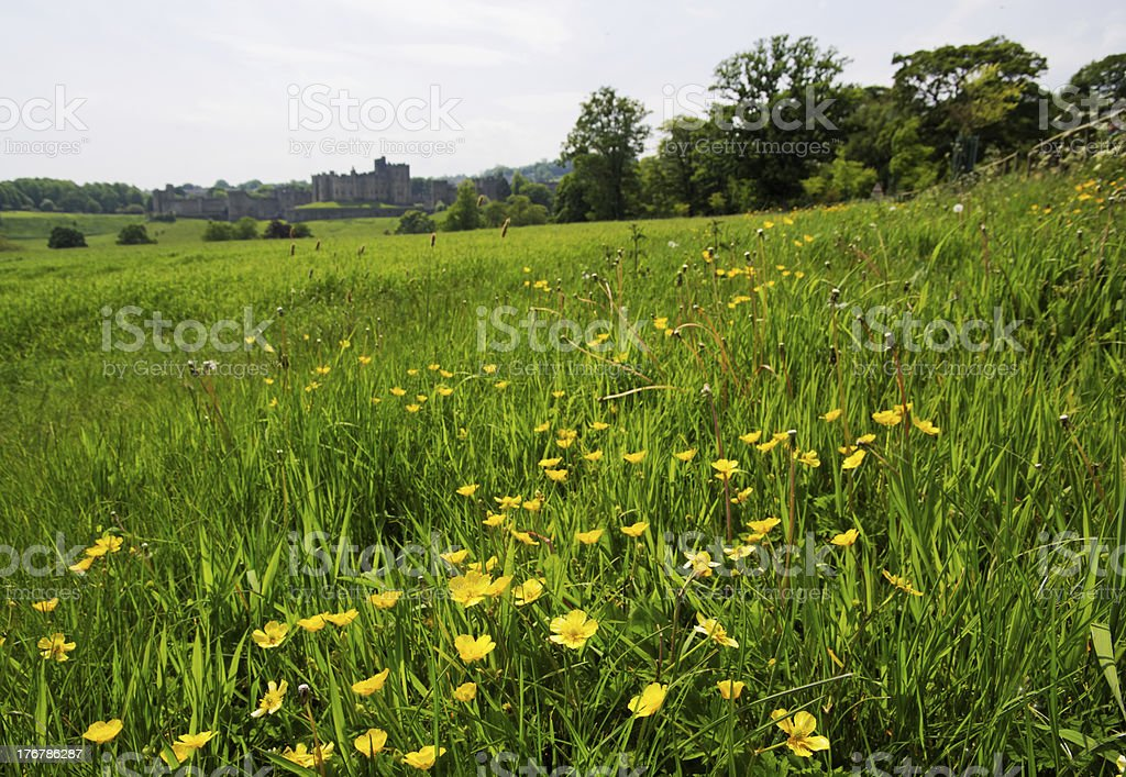 View Across Meadow To Alnwick Castle stock photo