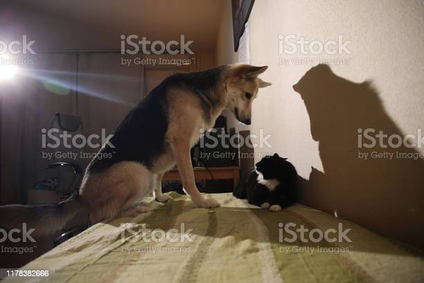 View at a cute mongrel dog chasing striped kitten indoor picture id1178382666?b=1&k=6&m=1178382666&s=612x612&h=uuyqb6birnvvlsfh1j2prlqm5hlp80yjrwz r0xw ri=