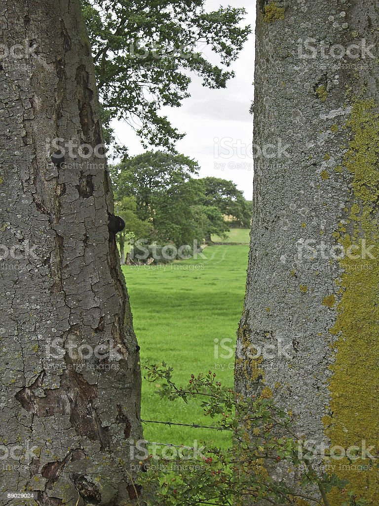 View Between Tree Trunks royalty-free stock photo