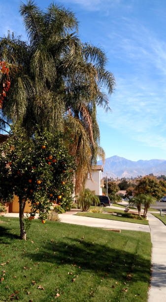 View down sidewalk toward San Bernardino Mountains with orange and palm trees in winter Southern California near Redlands California View down sidewalk toward San Bernardino Mountains with orange and palm trees in winter Southern California near Redlands California redlands california stock pictures, royalty-free photos & images
