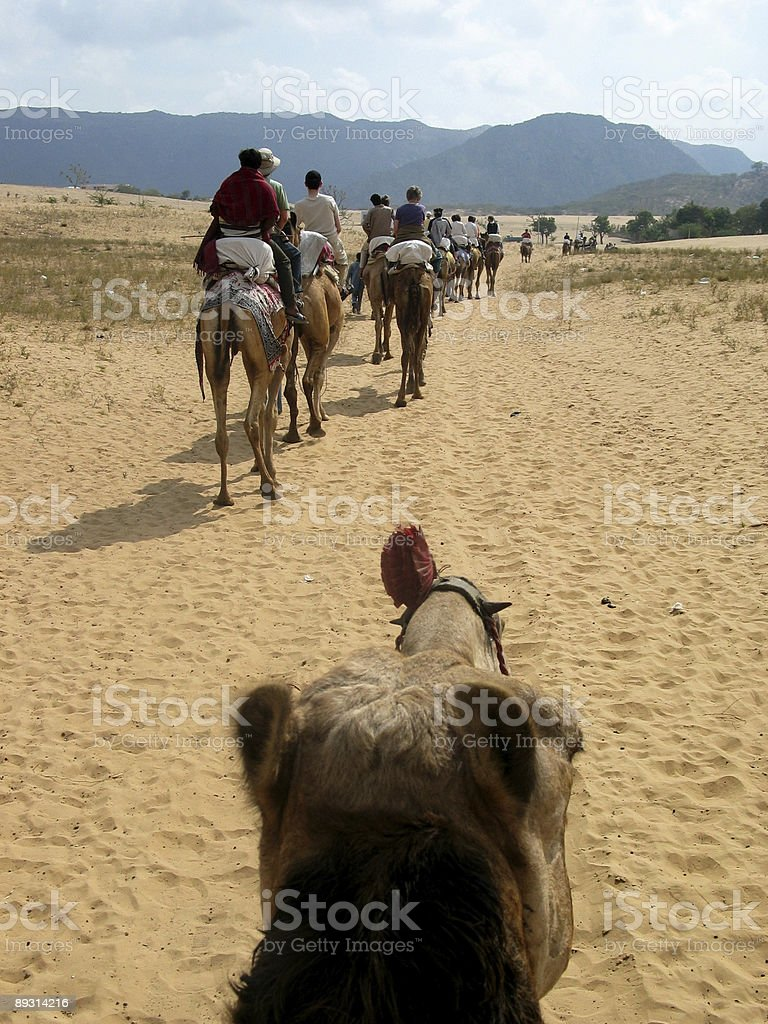 View from a camel - People on camels in Rajasthan stock photo