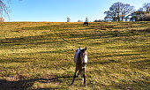 View from a horse on a green natural pasture with trees and blue sky.