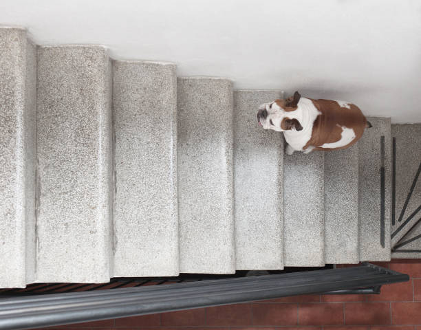 view from above of a dog climbing the stairs stock photo