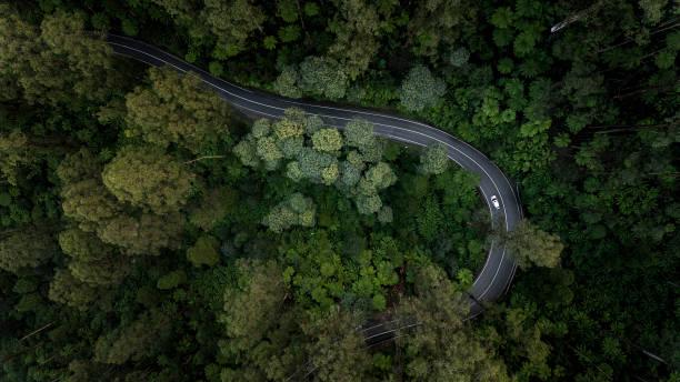 blick von oberhalb des waldes - aerial overview soil stock-fotos und bilder