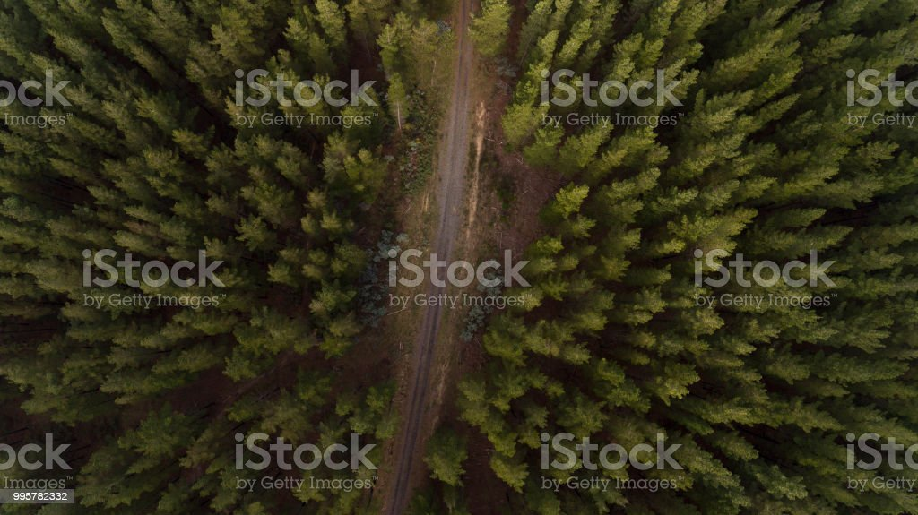Aerial Perspective of Tree Plantation and Roads