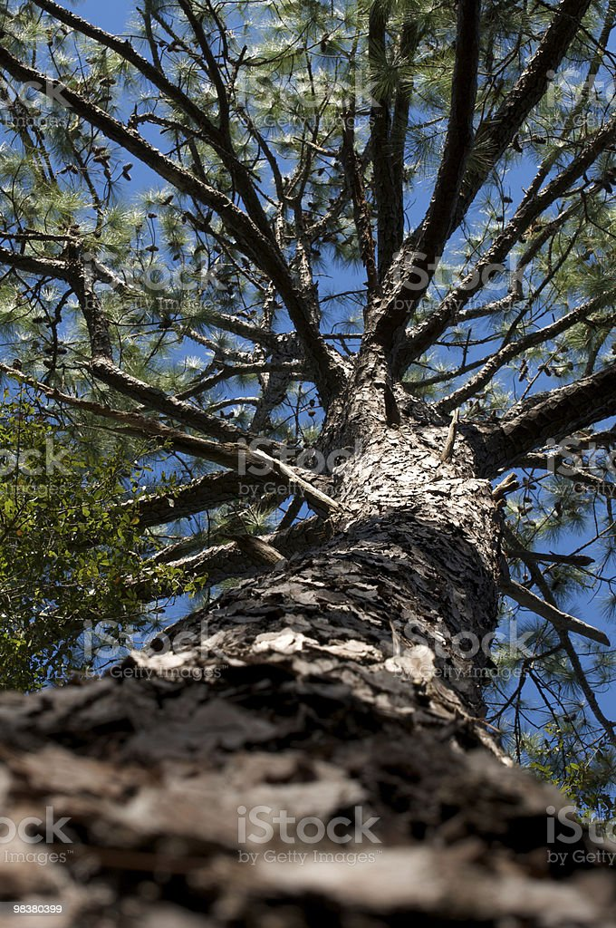 View from Below (High Focus) royalty-free stock photo