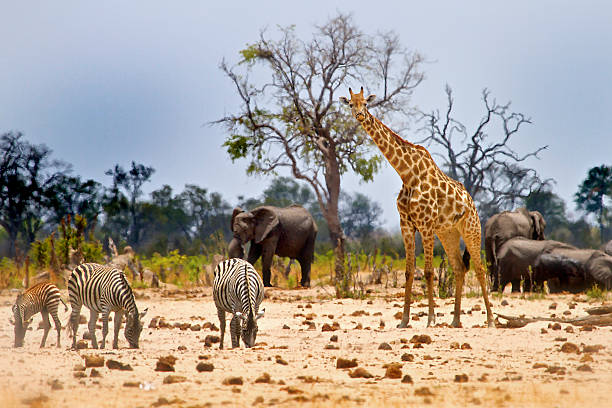 view from camp in hwange national park - animals in the wild stock pictures, royalty-free photos & images