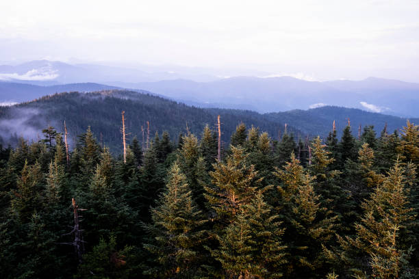 View from Clingman's Dome stock photo