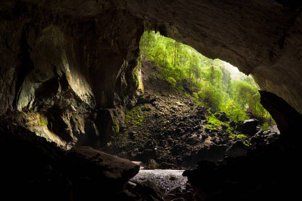 View from inside deer cave in gunung mulu national park View from inside deer cave in gunung mulu national park looking outside entrance sign stock pictures, royalty-free photos & images