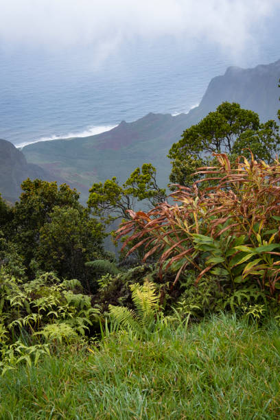 View from Kalalua Lookout stock photo