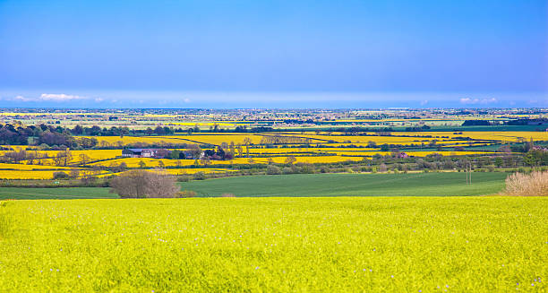 view from lincolnshire wolds - 林肯郡 個照片及圖片檔