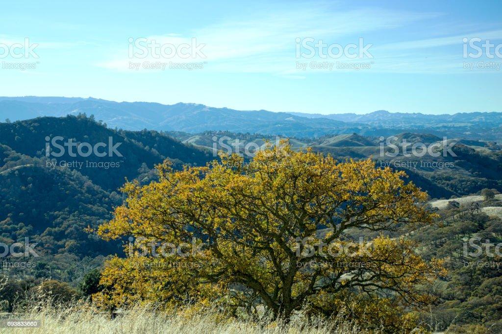View from Mt. Diabolo, California, USA stock photo