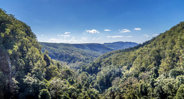 View from Pearling Brook lookout over the green forest trees stock photo