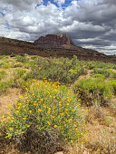 View from South Mesa in spring flowers and sagebrush in Rockville Utah toward Mt Kinesava in Zion National Park Utah in the distance.