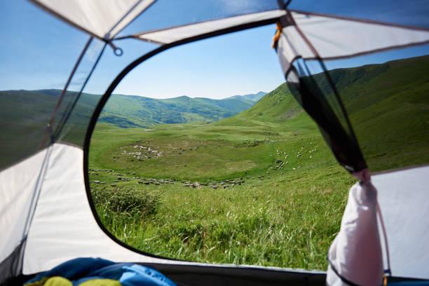blick vom zelteingang der schafherde auf alm. camping in den bergen - zelt stehhöhe stock-fotos und bilder
