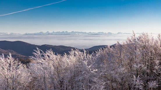 View from the Alsatian Belchen to the Swiss Alps