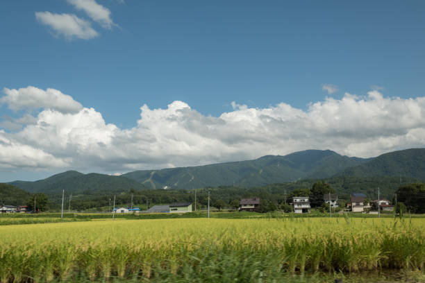 View from the road of Japanese rice fields and mountain range over the sky in Nagano. stock photo