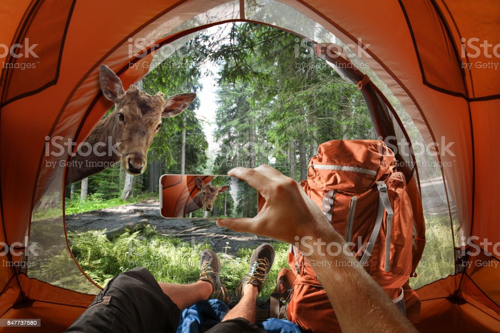 View from the tourist tent to the forest royalty-free stock photo