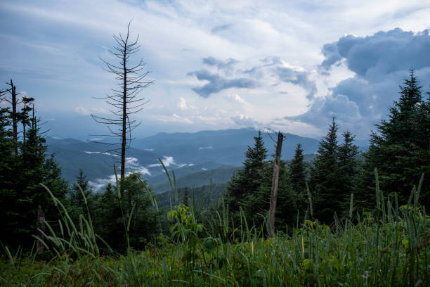 View from the Trail to Clingmans Dome stock photo