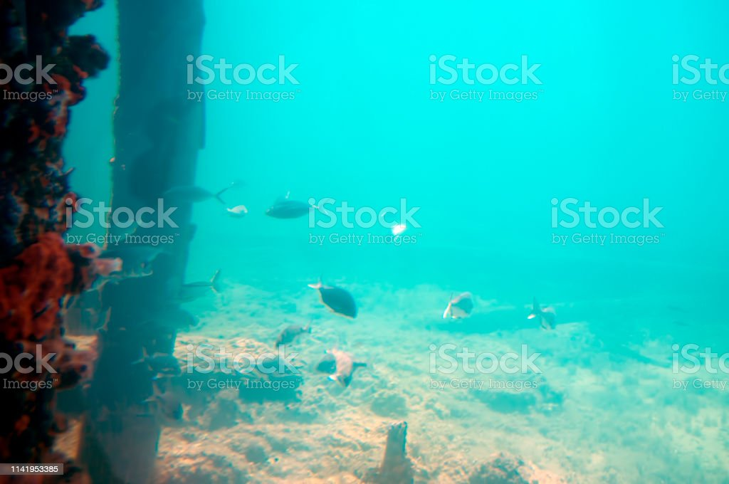 View from the Underwater Observatory, Busselton Jetty, Western...