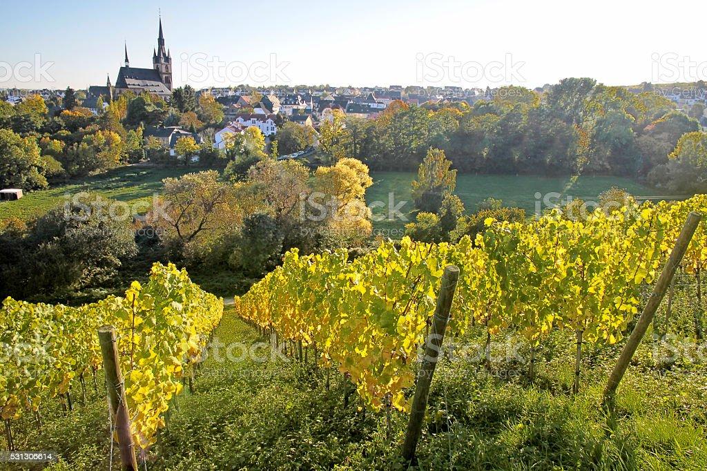 View from the vineyard to Kiedrich stock photo