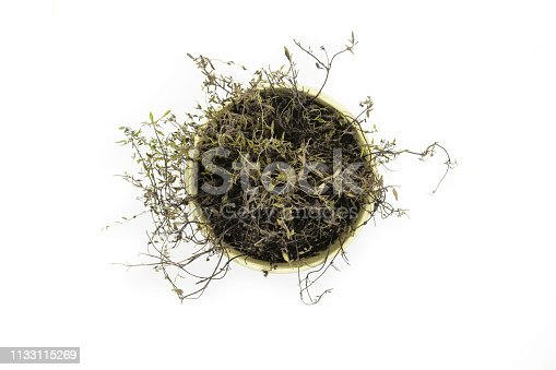 538450883istockphoto View from top of dried thyme shrub planted in a clay pot and isolated of white background 1133115269