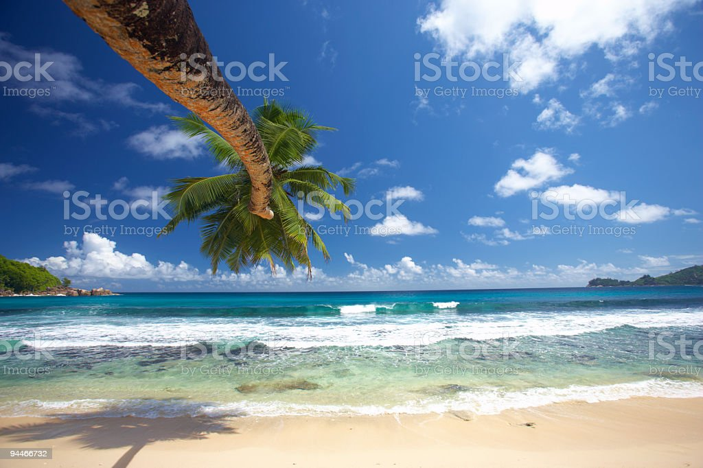 view from under the palmtree royalty-free stock photo