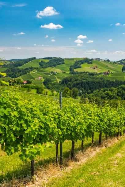 Blick vom Weinberg auf die Hügel der südstyrianischen Weinstraße – Foto