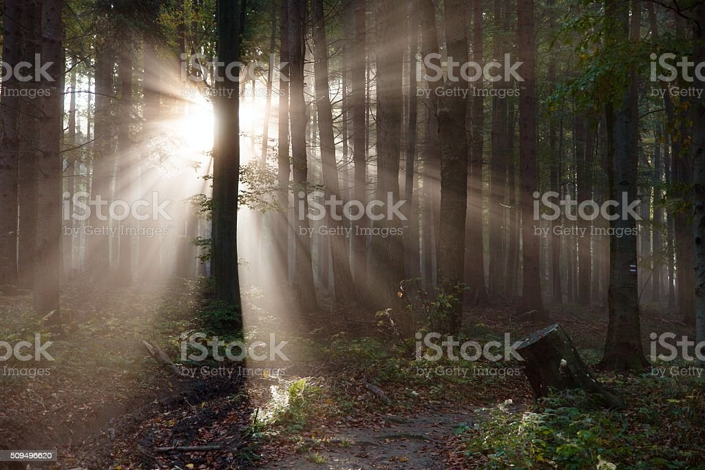 View from wood with contreyour sun rays stock photo