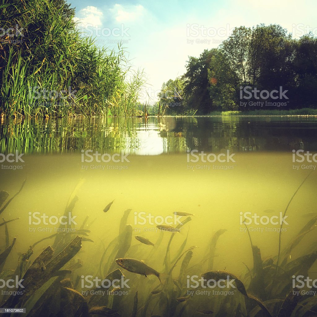 View half under water Underwater scene with reeds and little group of fish in light and bubbles . Beauty In Nature Stock Photo