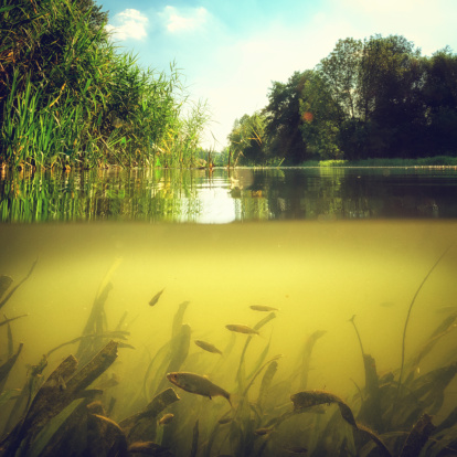 Underwater scene with reeds and little group of fish in light and bubbles .
