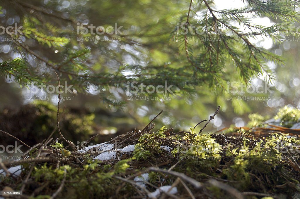 View in a forest royalty-free stock photo