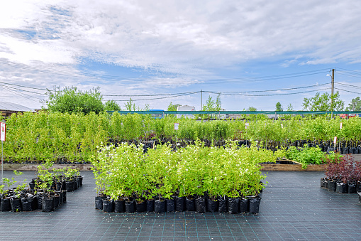 View in the rows of a tree nursery with numerous fruit trees and shrubs