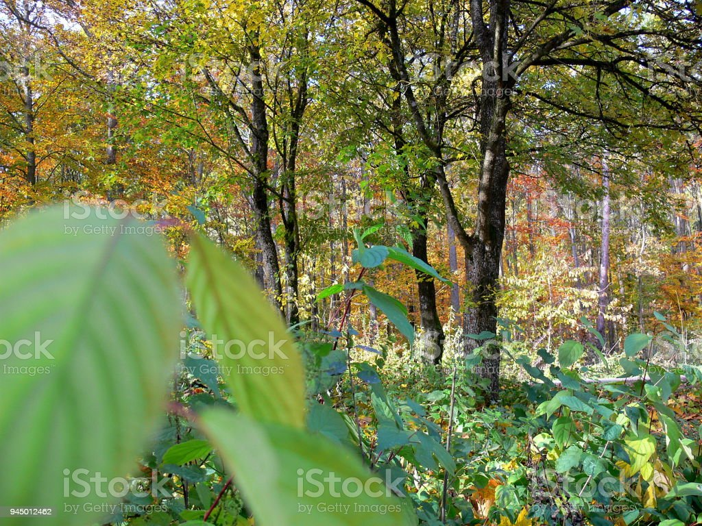 Blick In Den Herbstwald Stock Photo & More Pictures of Autumn | iStock