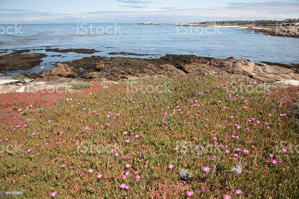View of 17 Mile Drive in California royalty-free stock photo