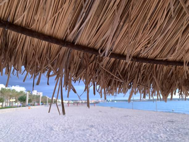 View of a beach from under a palm tree cover stock photo